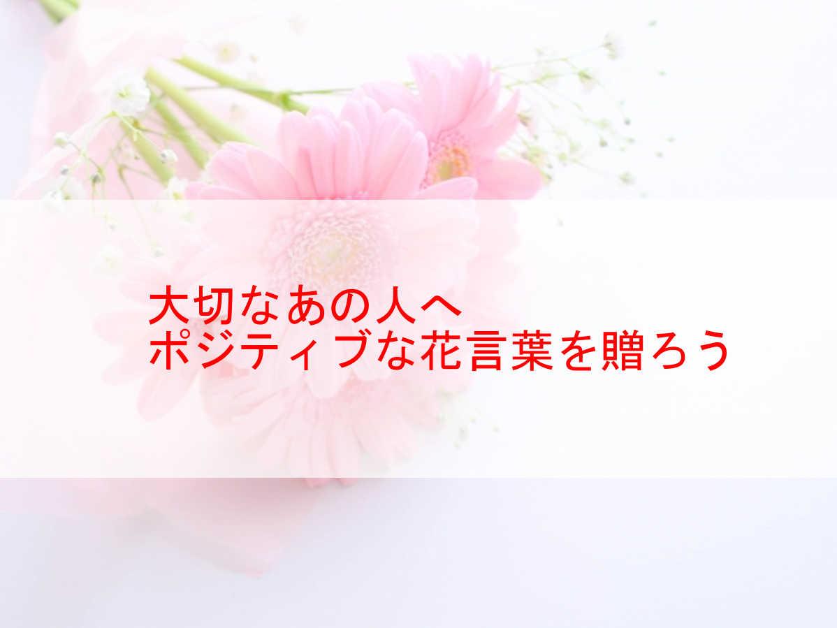 ポジティブな花言葉の花15選。大切な人へ前向きなエールを送ろう。